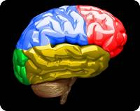 Human brain in color